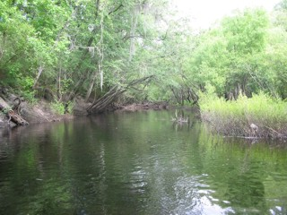 Link to the Suwannee River Water Management District